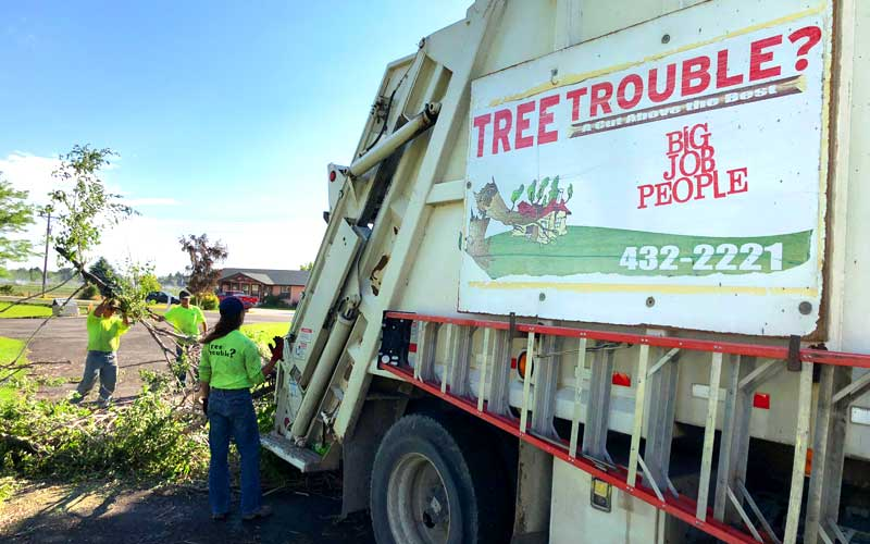 Tree Trouble provides full service tree removal, trimming and clean up