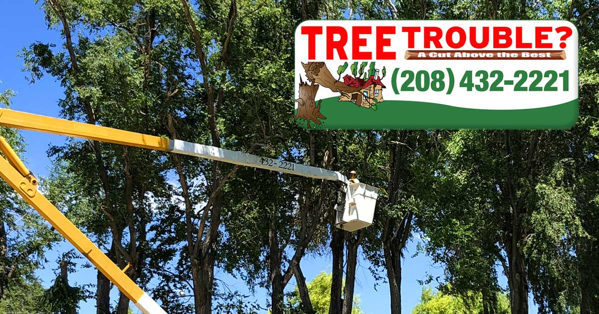 Enjoy the Benefits of Professional Tree Trimming and Removal from Tree Trouble