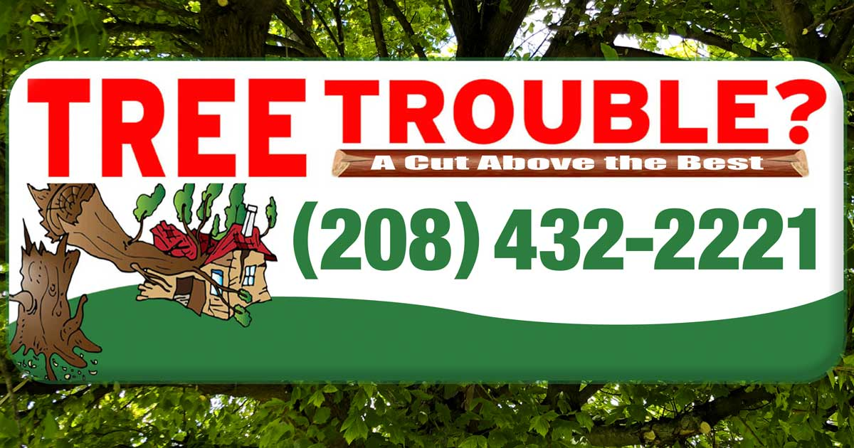 Welcome to Tree Trouble