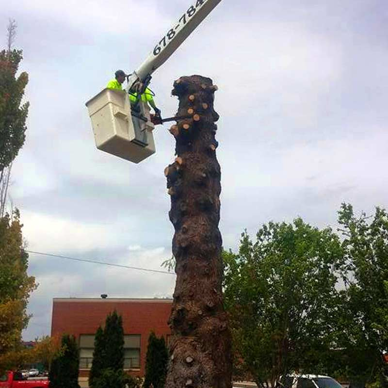 tree removal stump grinding magic valley southern idaho